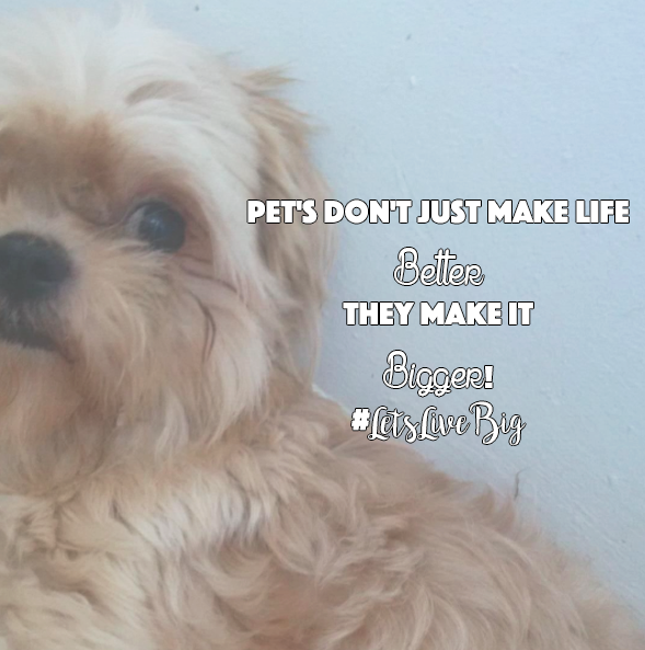 Pet's Don't Just Make Life Better – They Make It Bigger! #LetsLiveBig