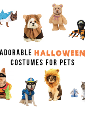 Pet-Lovers Have an Adorable Halloween With Your Pet